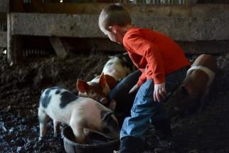 As we raise our farm family...