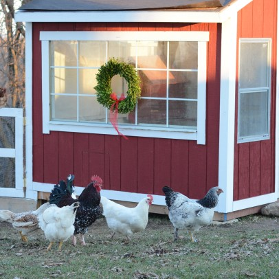 chickencoop2